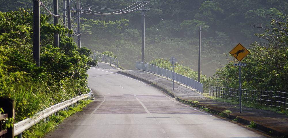 Landstraße auf Iriomote