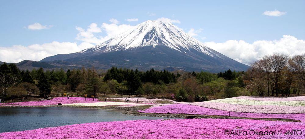 Fuji und Shibazakura