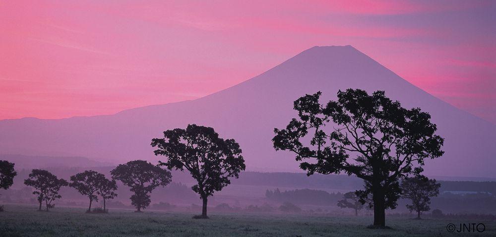 Fuji und Bäume