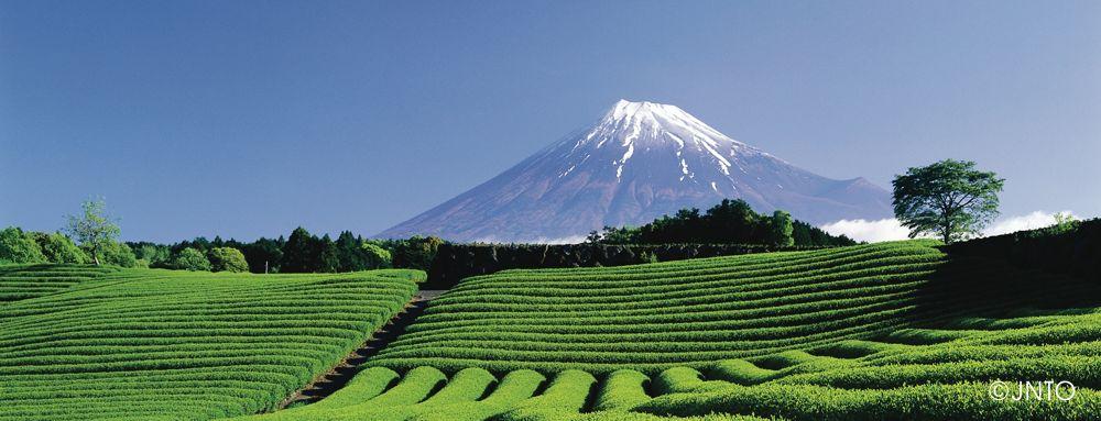 Fuji und Teeplantage